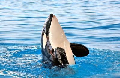 Lássuk a delfint!?