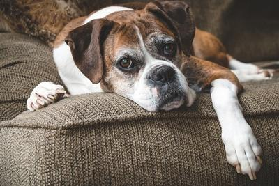 Öregszik a kutyánk