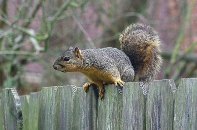 Vigyázz, ha jön a mókus!